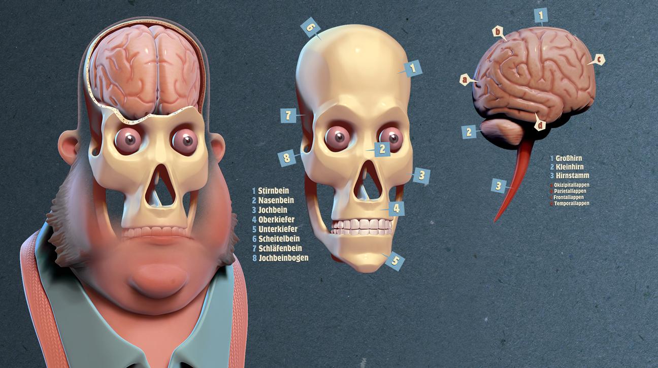 3D-Illustration: stilisierte anatomische Darstellung des menschlichen Kopfes, Schädels und Hirns mit Beschriftung.