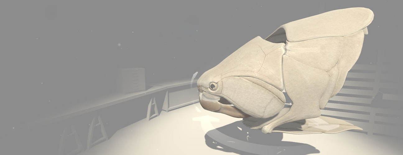 Interaktive 3D-Illustration: Panzerfisch-Schädel in Virtual-Reality-Umgebung
